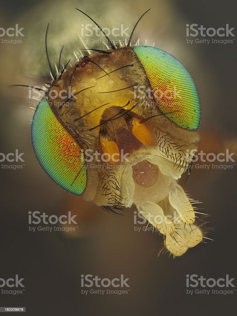 Picture winged fly stock photo