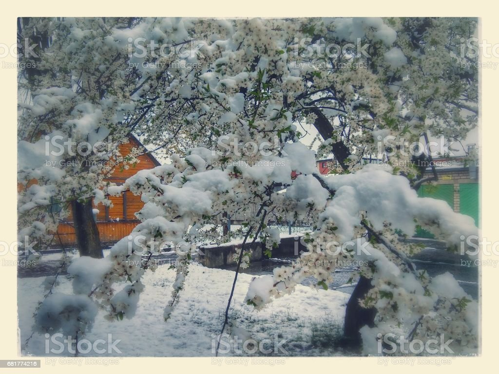 Picture with landscape with branch in bloomy with snow stock photo