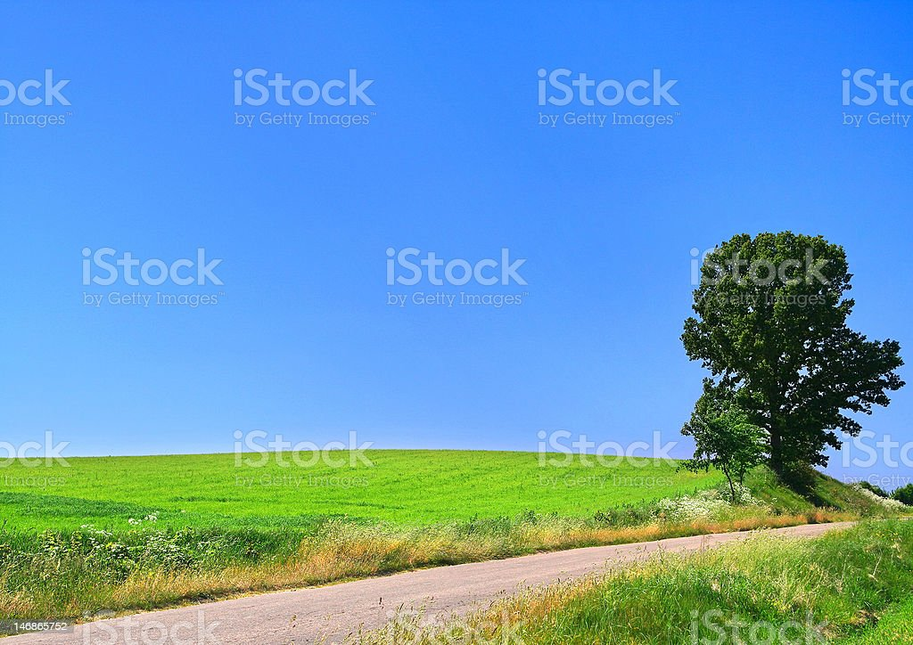 picturesque country road and lone tree royalty-free stock photo