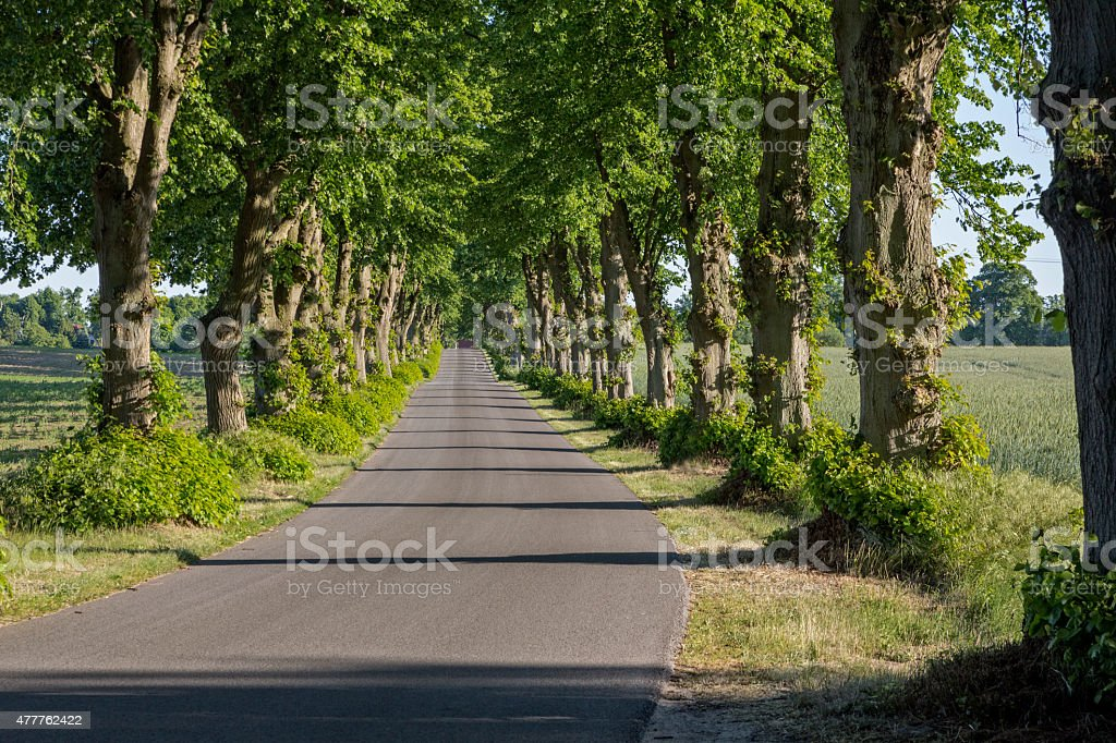 Picturesque lime tree alley in East Germany stock photo