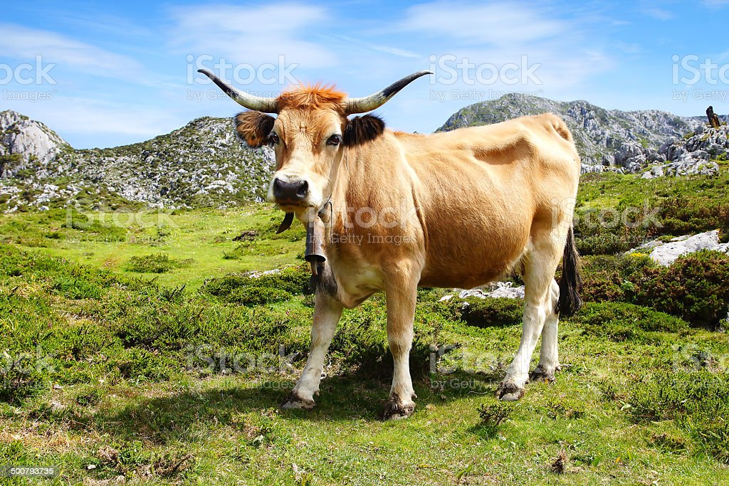 Picturesque nature landscape with cow. royalty-free stock photo