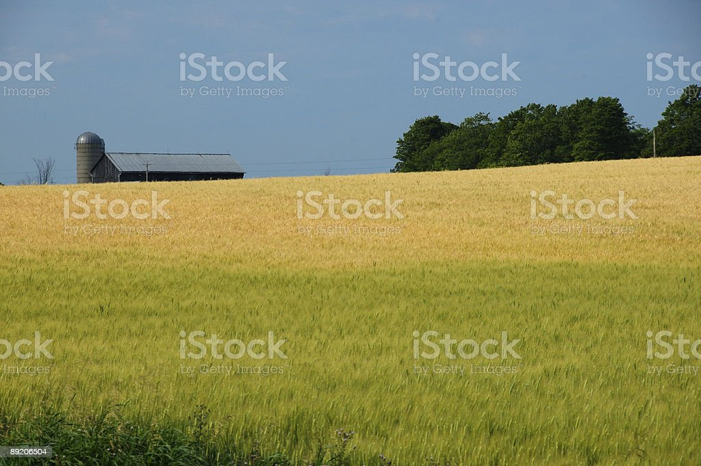 Picturesque Ontario countryside farm stock photo