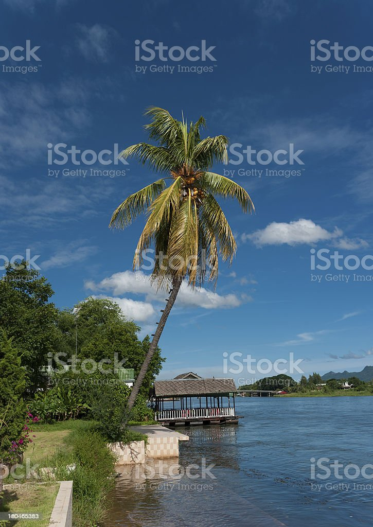 picturesque palm tree leans over the tropical river royalty-free stock photo