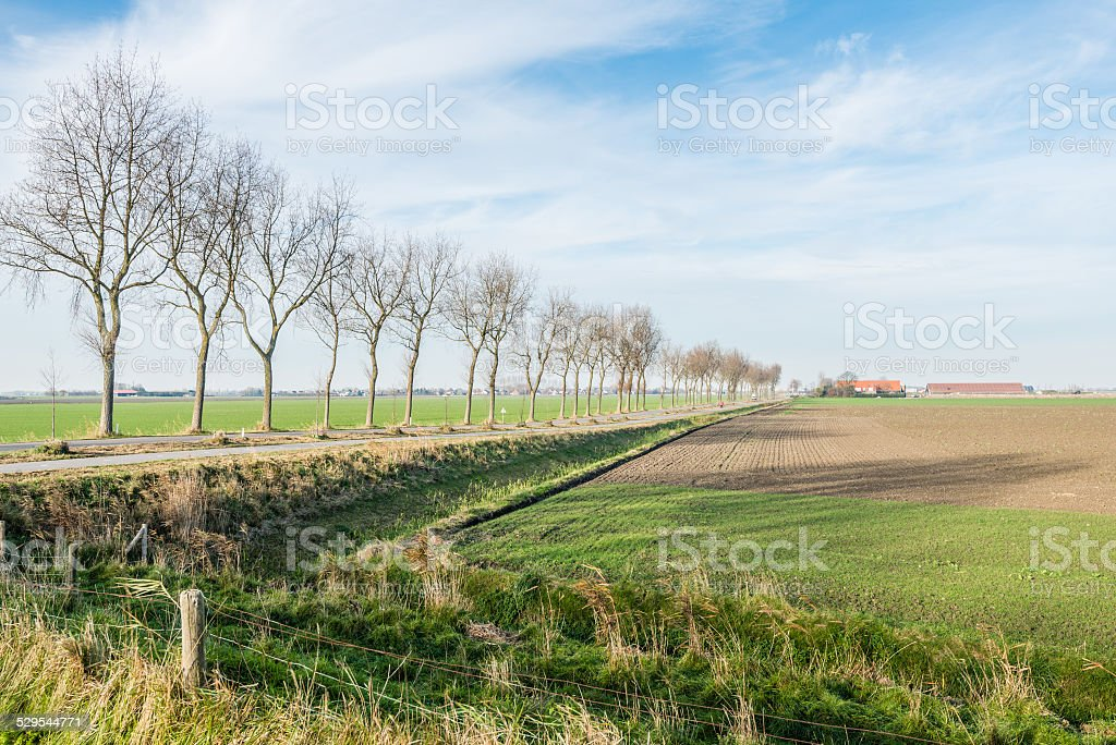 Picturesque polder landscape in autumn stock photo