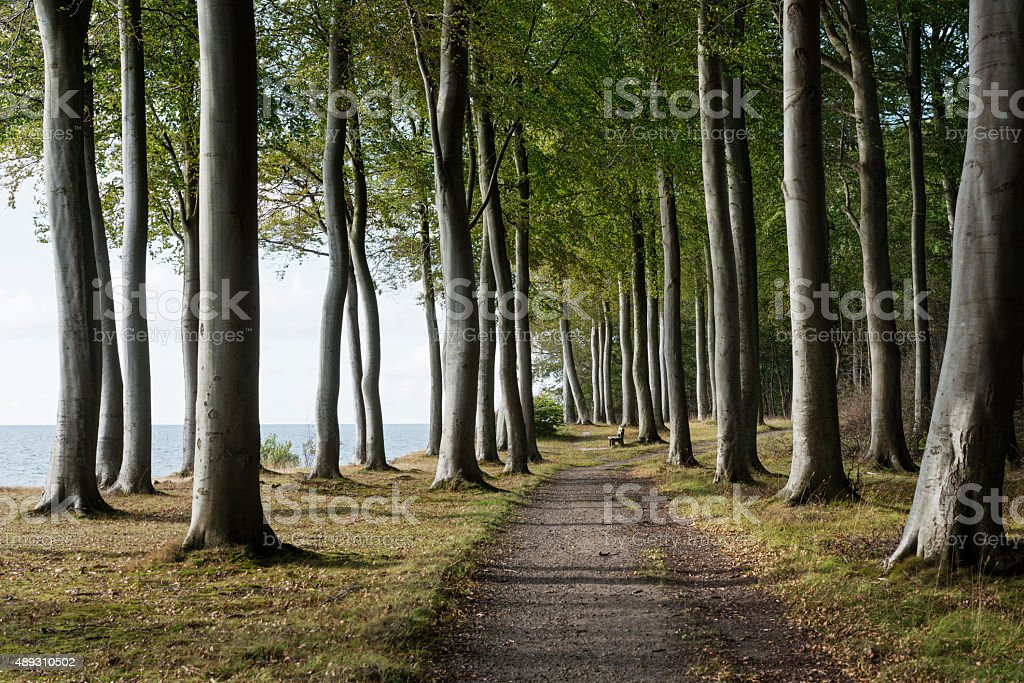 Picturesque Woodland on the Coastline of M?n Denmark stock photo