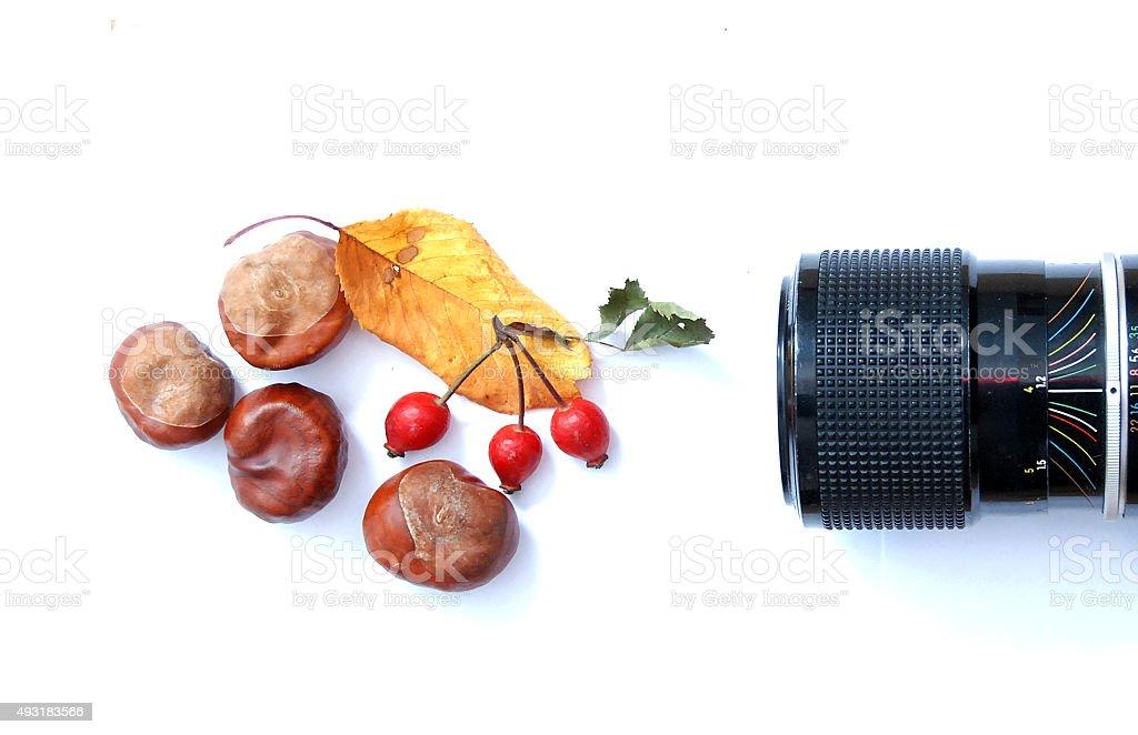 Picturing autumn stock photo