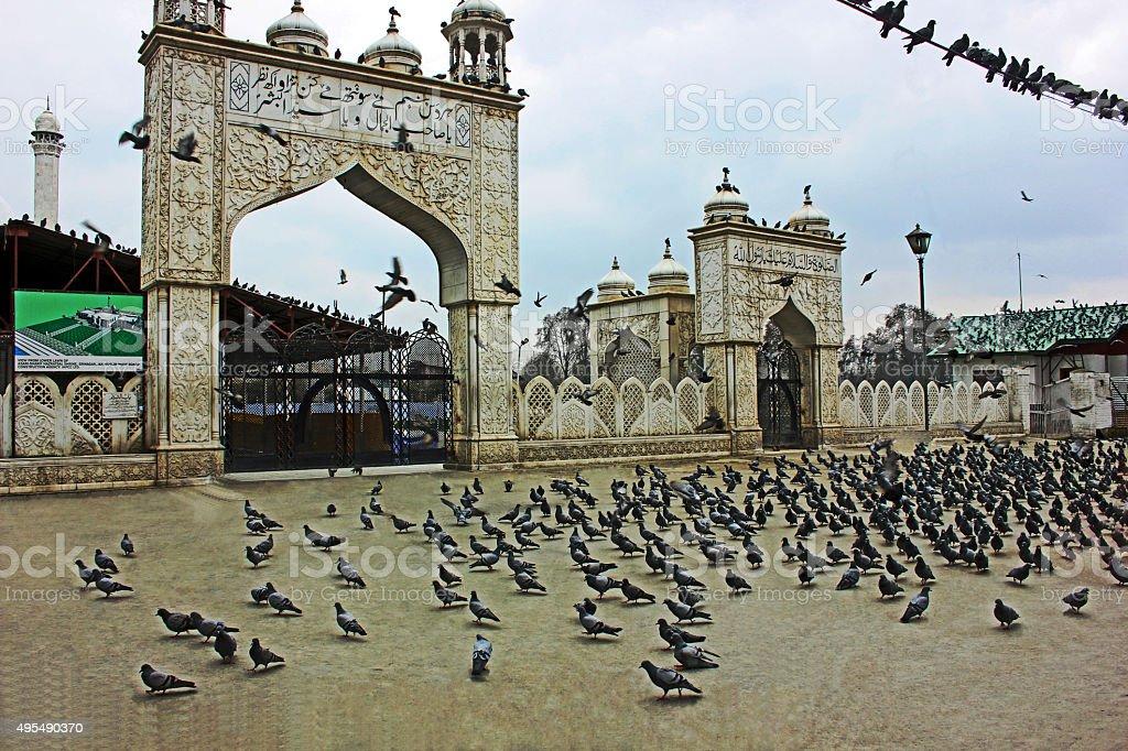 Pidgeons At Hazratbal Shrine, Srinagar, Kashmir, India stock photo