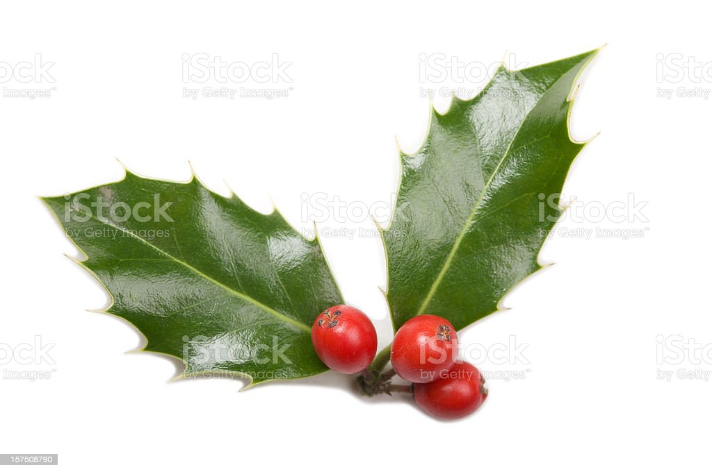 A piece of mistletoe on a white background stock photo
