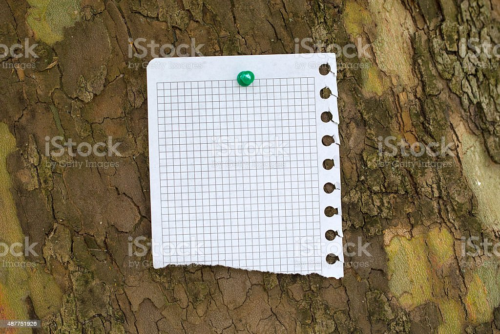 Piece of paper at the bark of tree stock photo