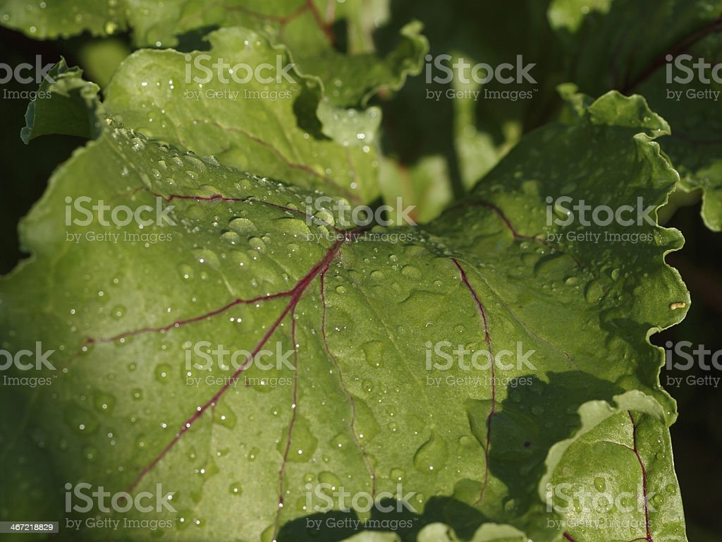 piece of red beets royalty-free stock photo