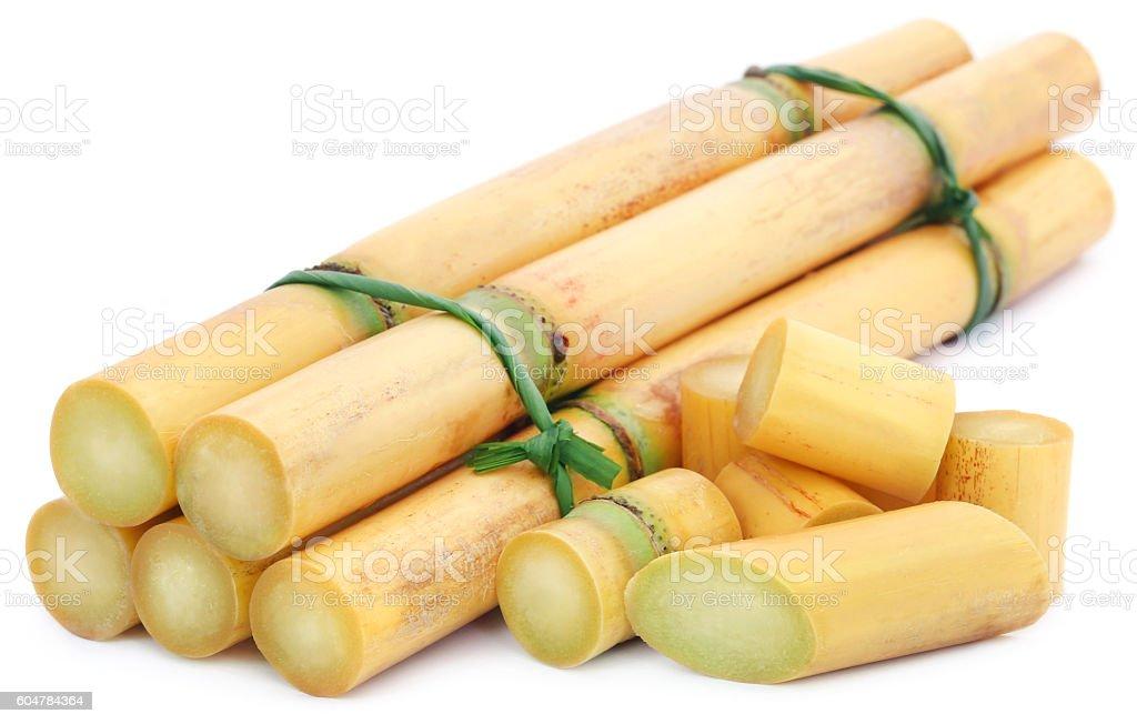 Piece of sugarcane stock photo