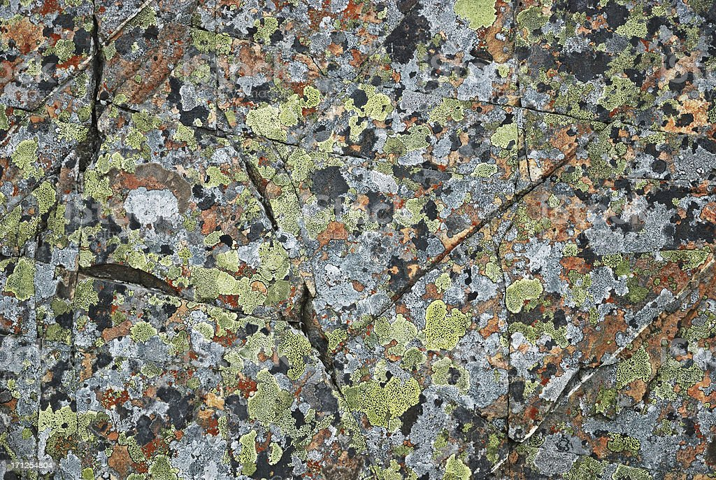 Pied mossy pattern on the arctic rock royalty-free stock photo