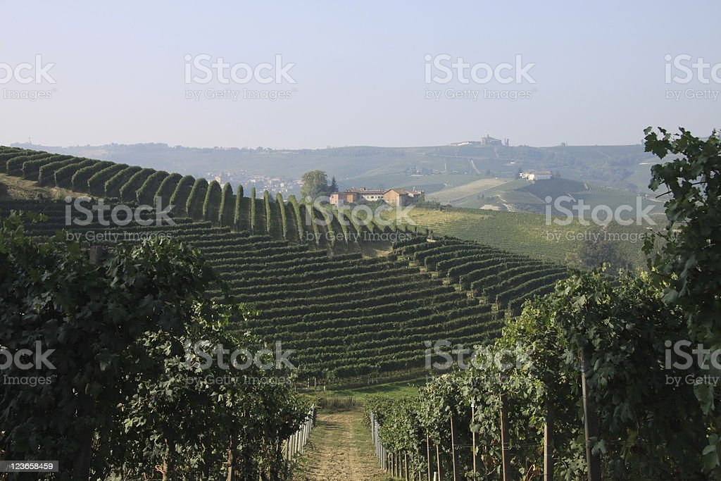 Piedmont italian vineyard landscape royalty-free stock photo