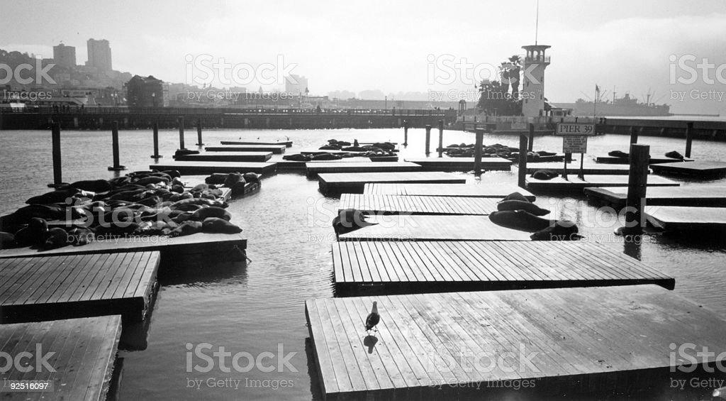 pier 39 san francisco califronia royalty-free stock photo