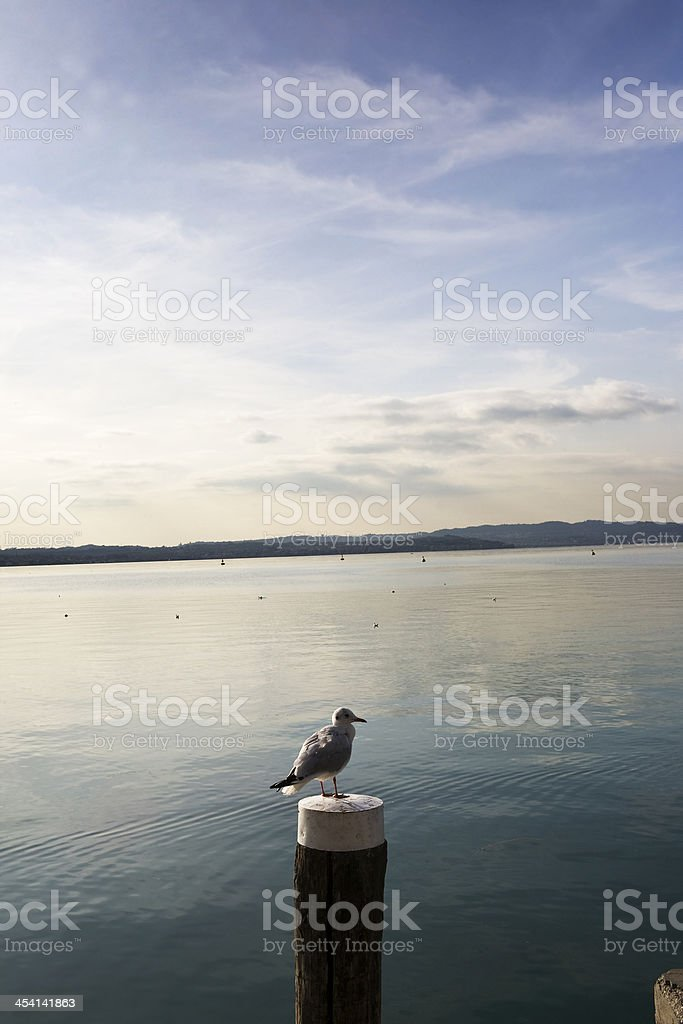 pier and seagull stock photo