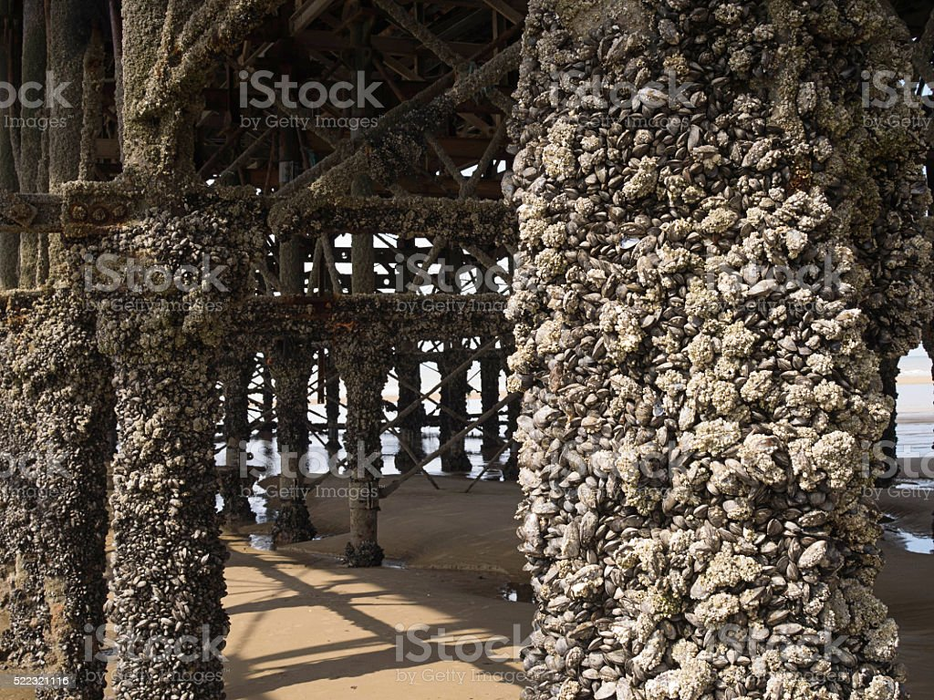 Pier with barnacles stock photo