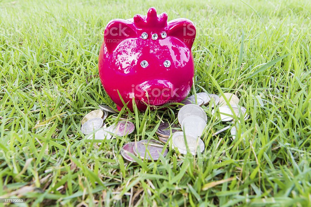 pig bank on grass royalty-free stock photo