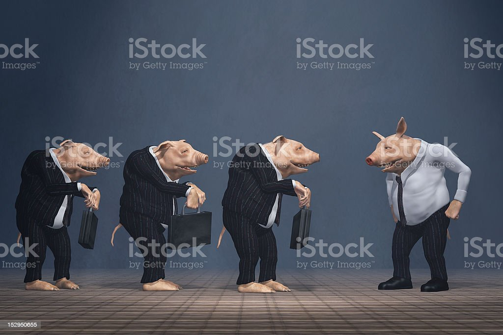 pig boss stock photo