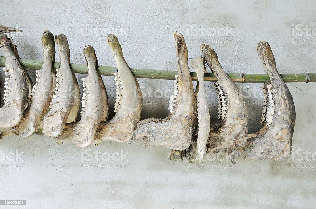 Pig chin bone (Yunnan food culture) stock photo