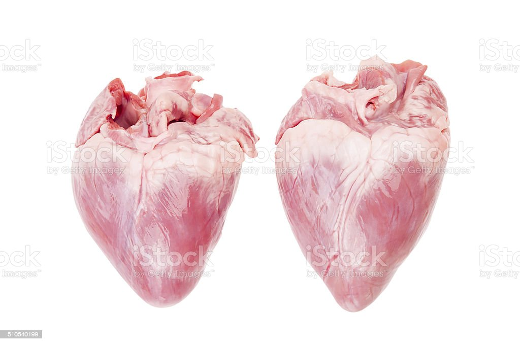 Pig heart isolated with clipping path. stock photo