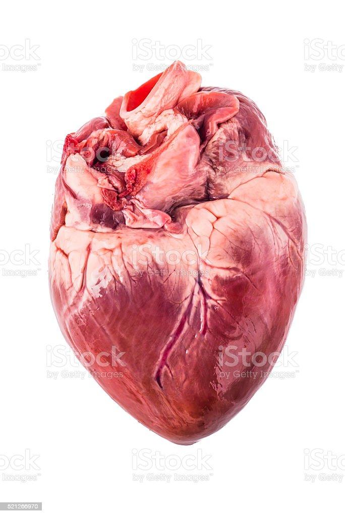 Pig heart stock photo