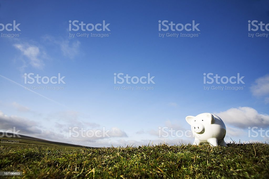 Pig on a hill royalty-free stock photo