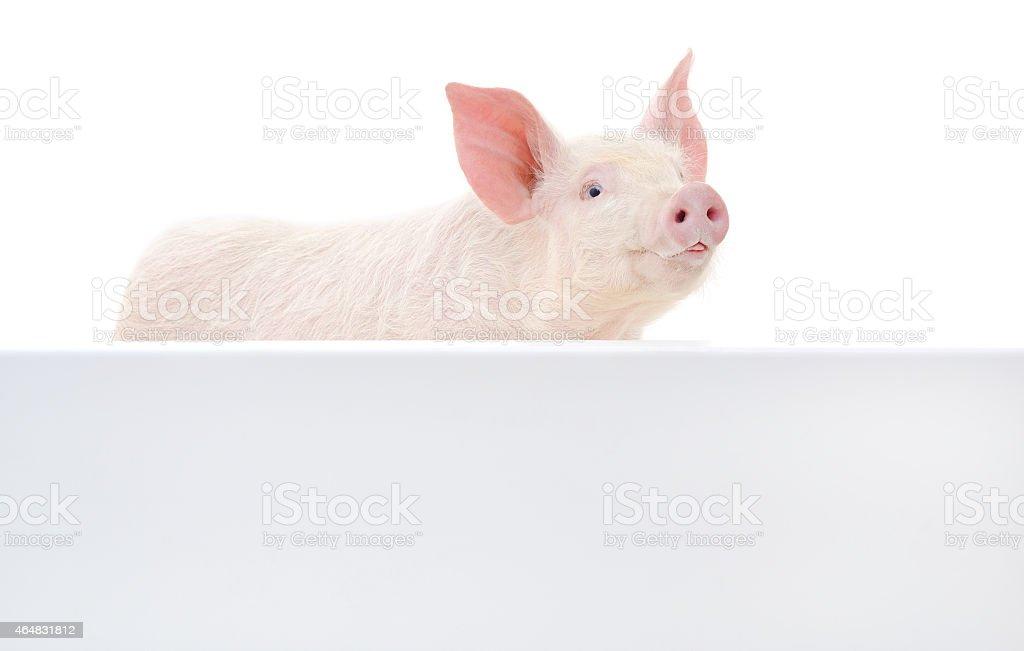 Cerdo con tabla de planchar foto de stock libre de derechos