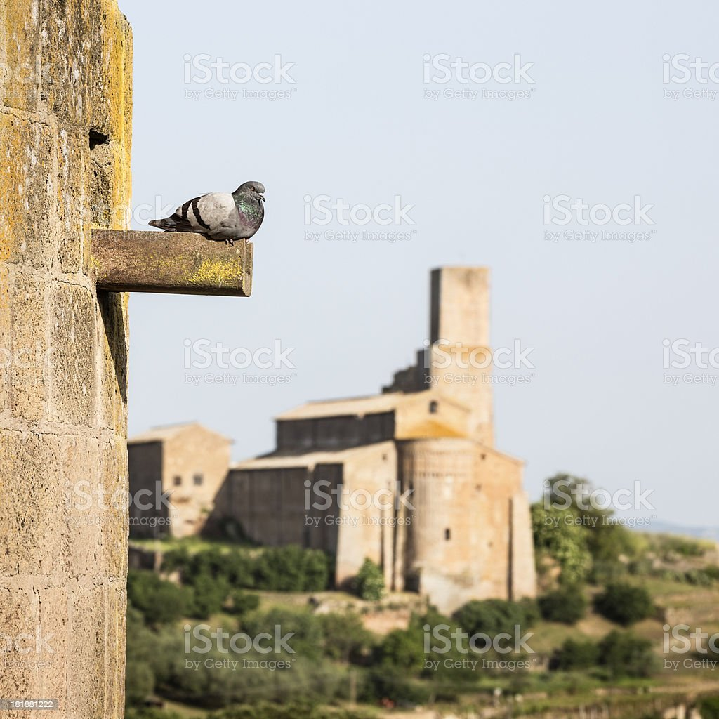 Pigeon and Church of Saint Peter in Tuscania, Lazio Italy royalty-free stock photo