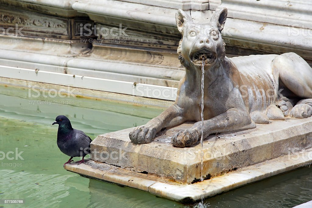 pigeon at an antique Italian fountain stock photo