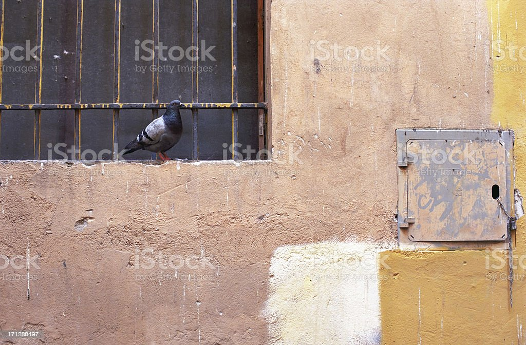 Pigeon at the window in a run-down alley royalty-free stock photo