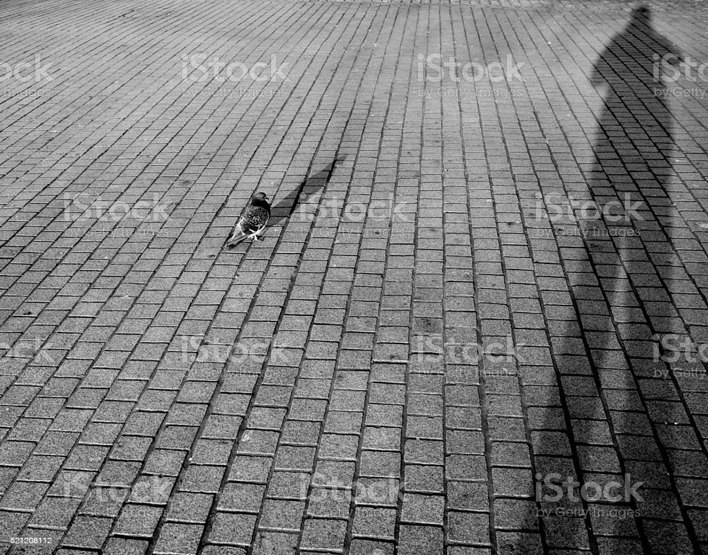 Pigeon beside human shadow projected on the pavement stock photo