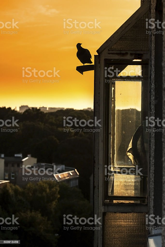 Pigeon black silhouette on roof. royalty-free stock photo