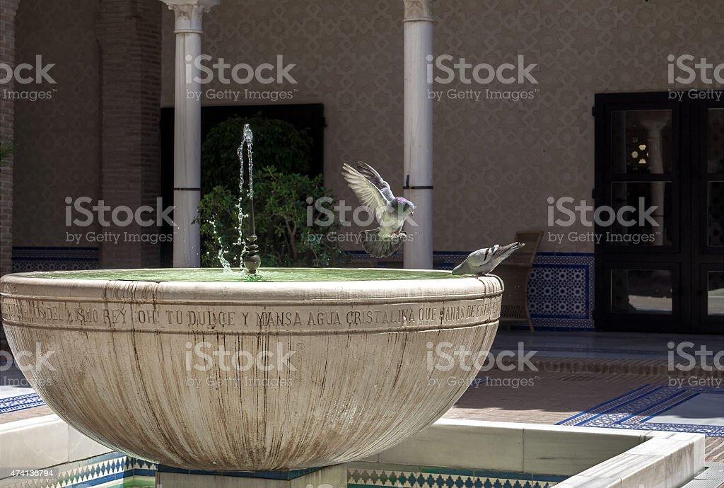 Pomba no ar com fonte de água. foto royalty-free