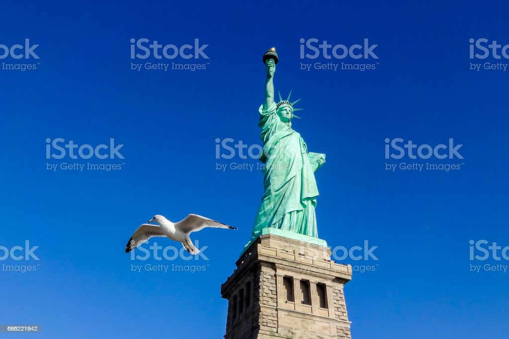 Pigeon in front of Statue of Liberty at perfect weather conditions blue sky copper stock photo