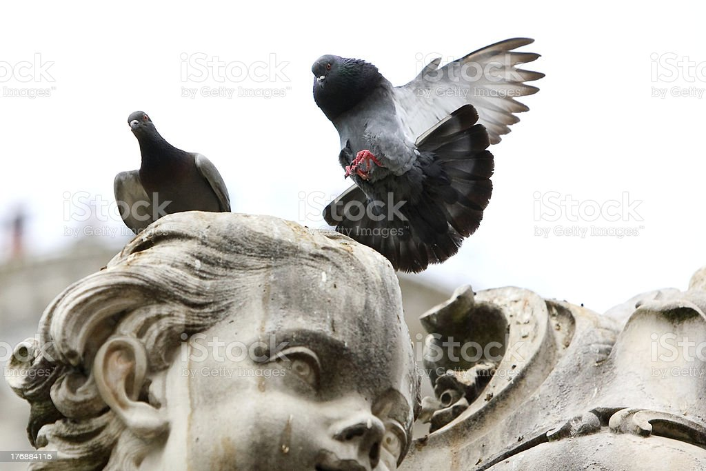Pigeon lands on the statue royalty-free stock photo