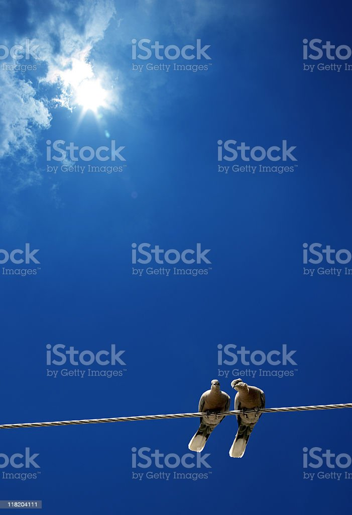 pigeon love under sun royalty-free stock photo