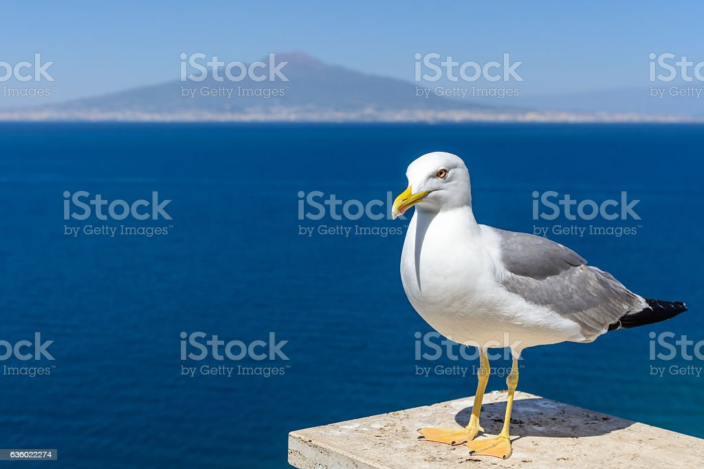 Pigeon next to the sea. Gray and white pigeon watching stock photo