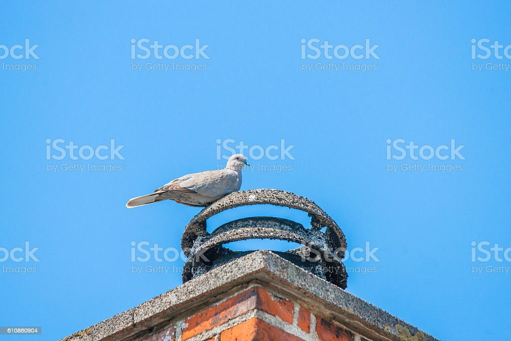 Pigeon on a bricked chimney stock photo