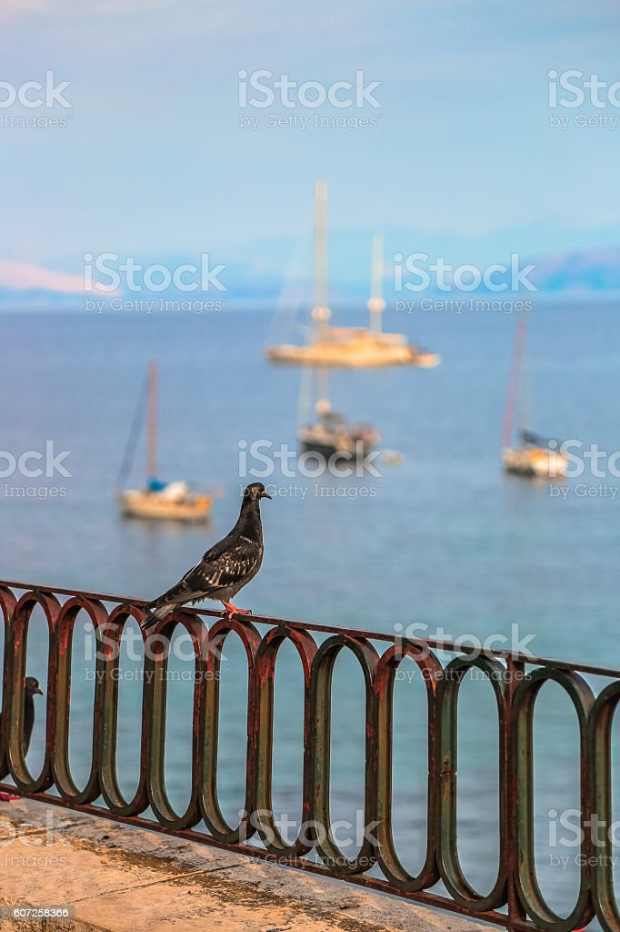 Pigeon on a railing against seascape background with sailboats stock photo