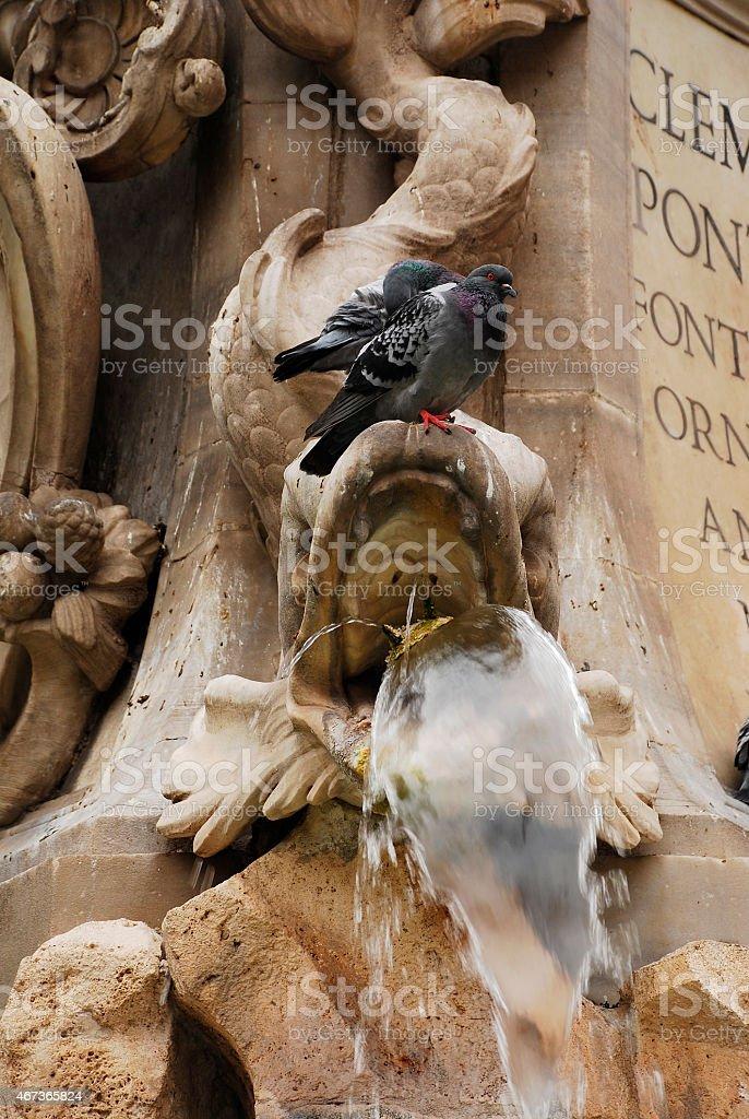 Pigeon on Pantheon Fountain stock photo