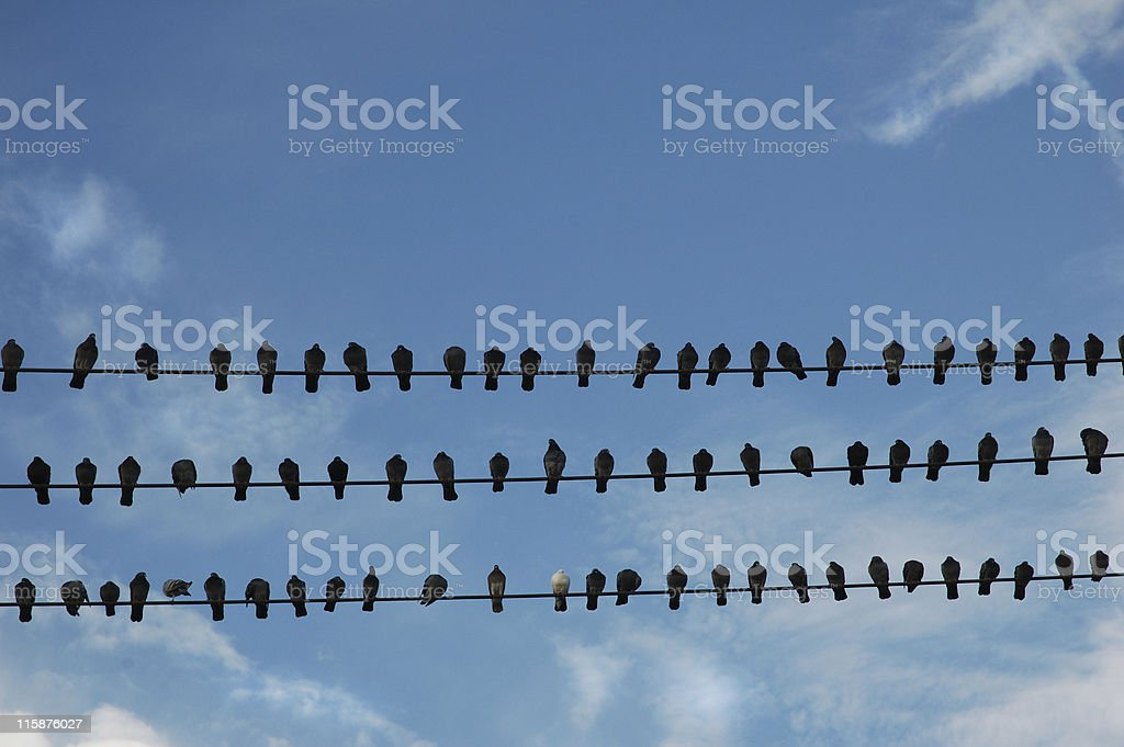 Pigeon Parking or Birds of a Feather Flock Together royalty-free stock photo