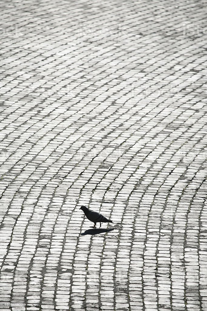 Pigeon silhouette and cobblestone, Rome Italy royalty-free stock photo