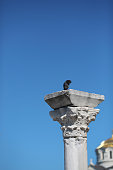 pigeon sitting on Part of a column of  temple