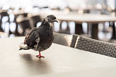 Pigeon standing on just one leg