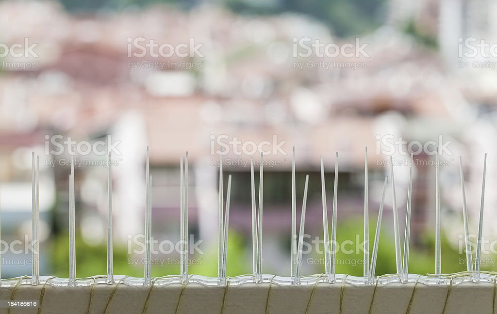 pigeon stopper stock photo