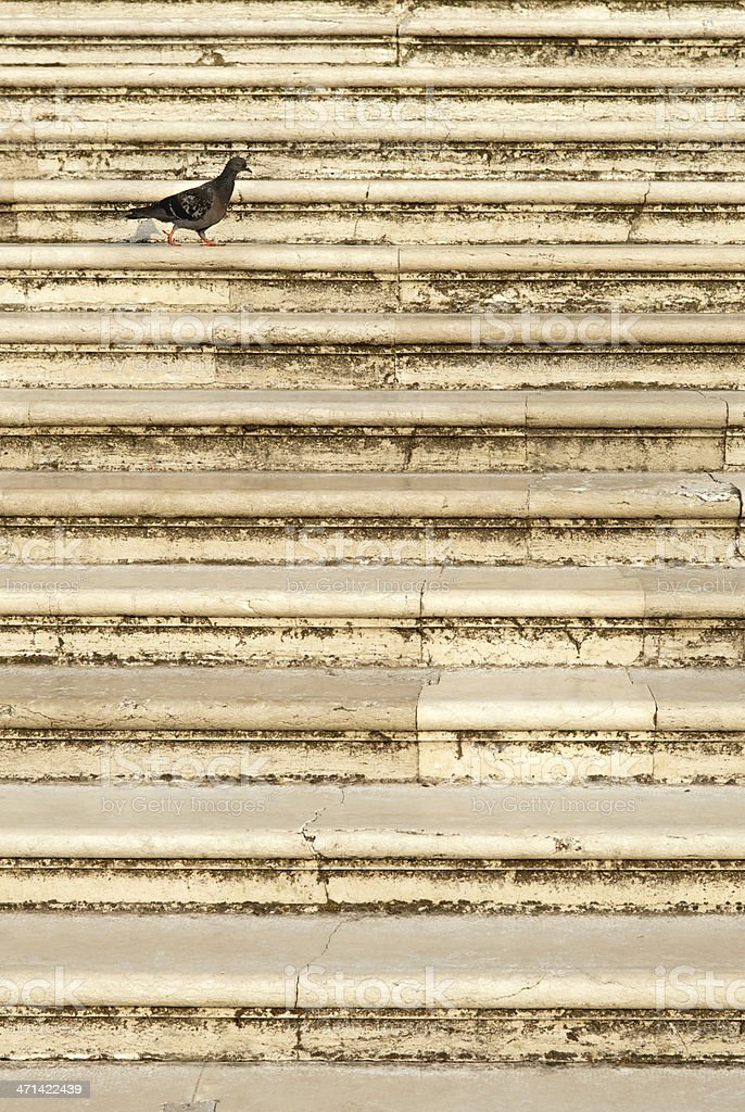 Pigeon Walking Across Marble Staircase stock photo