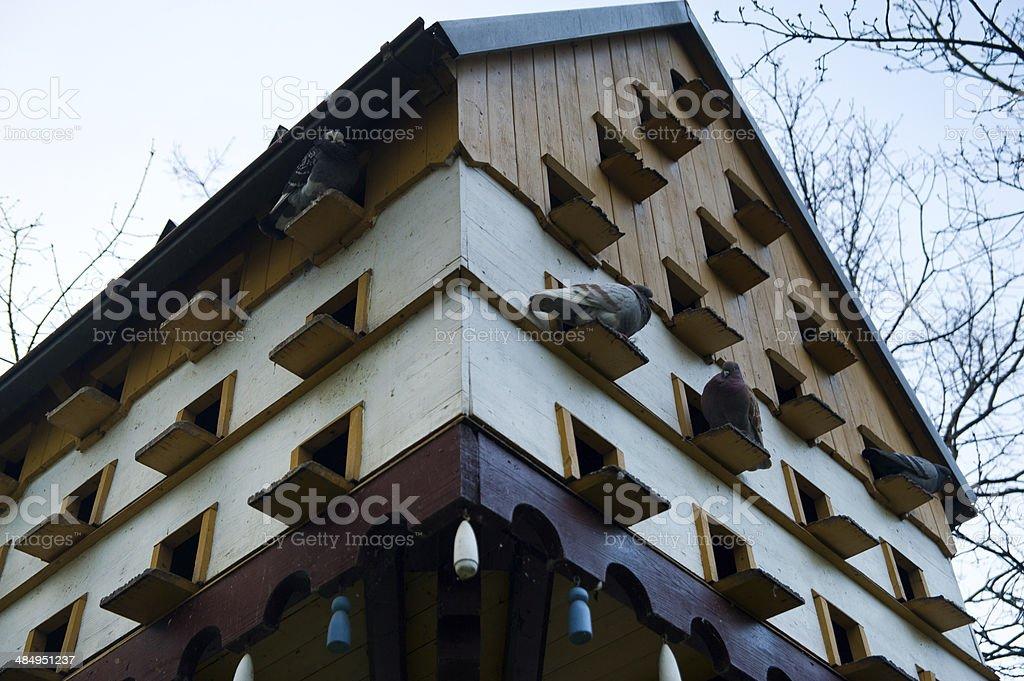 Pigeonry stock photo