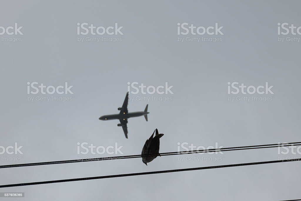 Pigeons, airplane, freedom stock photo