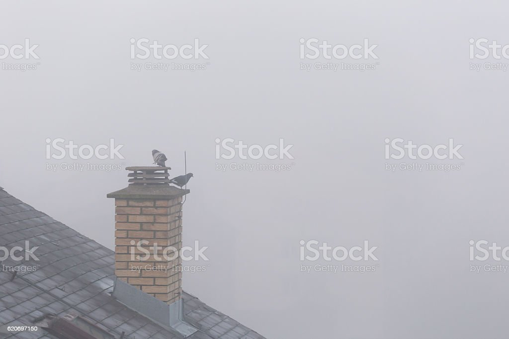 Pigeons at top of building on foggy morning in city stock photo