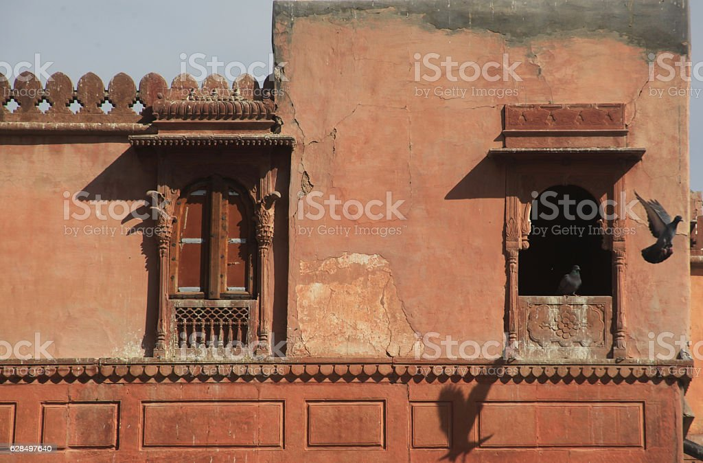 Pigeons chiling at Junagarh, Fort, bikaner, rajasthan, stock photo